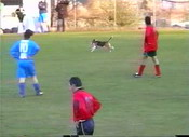 04 - Cane in campo